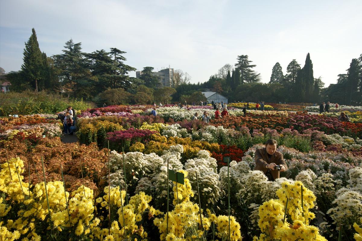 увеличить продажи фото город душанбе парк ботанический сад день рождения ничего